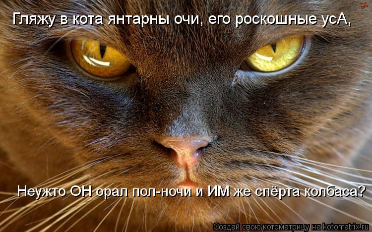 Котоматрица: Гляжу в кота янтарны очи, его роскошные усА, Неужто ОН орал пол-ночи и ИМ же спёрта колбаса?