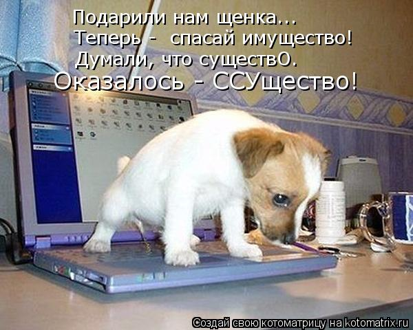 Подарили нам щенка..… Теперь -  спасай имущество! Думали, что существО. Оказалось - ССУщество!