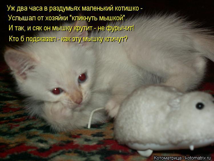 """Котоматрица: Уж два часа в раздумьях маленький котишко - Услышал от хозяйки """"кликнуть мышкой"""". И так, и сяк он мышку крутит - не фурычит! Кто б подсказал - ка"""