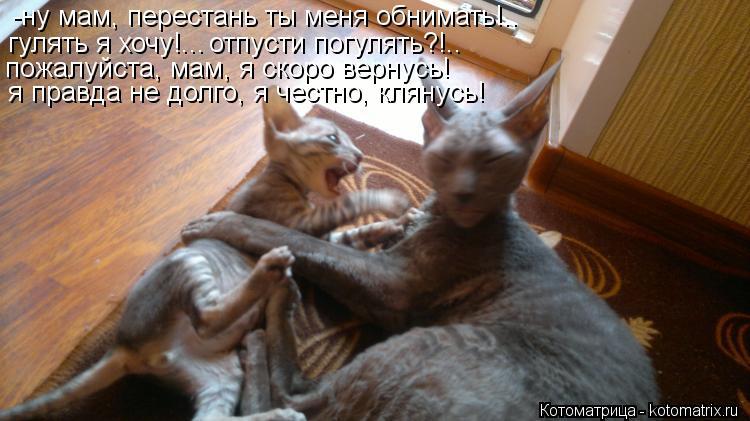 Котоматрица: -ну мам, перестань ты меня обнимать!.. гулять я хочу!... отпусти погулять?!.. пожалуйста, мам, я скоро вернусь! я правда не долго, я честно, клянус