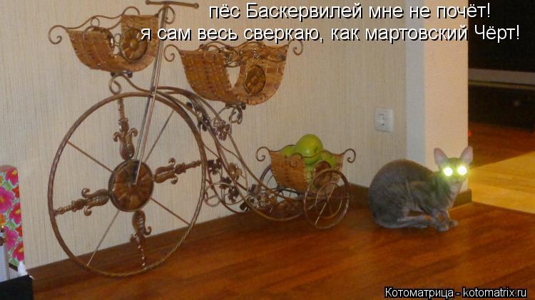 Котоматрица: я сам весь сверкаю, как мартовский Чёрт!   пёс Баскервилей мне не почёт!
