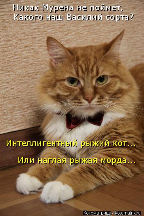 Котоматрица: Никак Мурена не поймет, Какого наш Василий сорта? Интеллигентный рыжий кот... Или наглая рыжая морда...