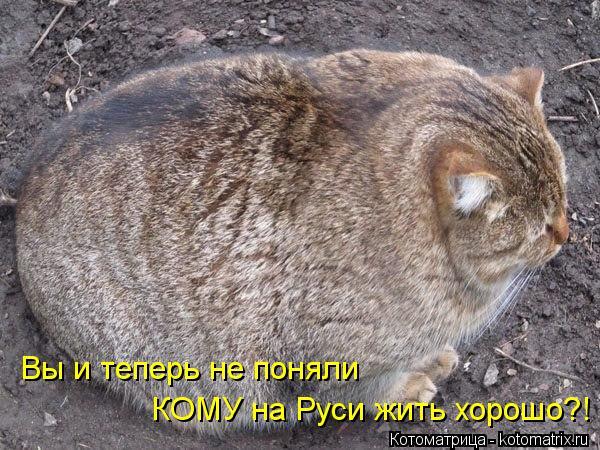 Котоматрица: Вы и теперь не поняли КОМУ на Руси жить хорошо?!