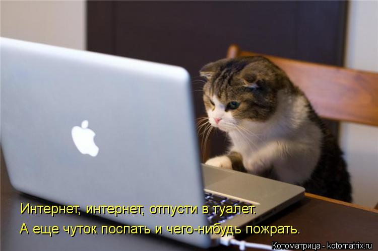 Котоматрица: Интернет, интернет, отпусти в туалет. А еще чуток поспать и чего-нибудь пожрать. Интернет, интернет, отпусти в туалет.
