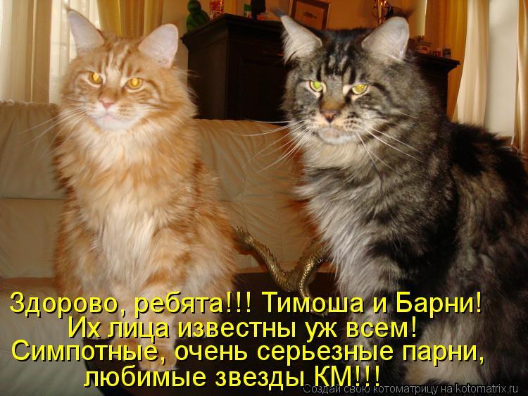 Котоматрица: Их лица известны уж всем! Симпотные, очень серьезные парни, любимые звезды КМ!!! Здорово, ребята!!! Тимоша и Барни!