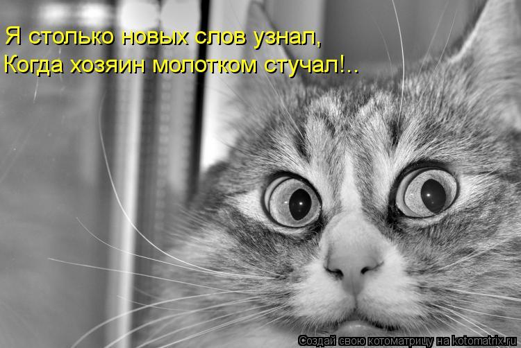 Котоматрица: Я столько новых слов узнал, Когда хозяин молотком стучал!..