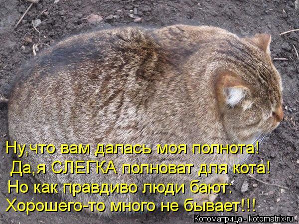 Котоматрица: Ну,что вам далась моя полнота! Да,я СЛЕГКА полноват для кота! Но как правдиво люди бают: Хорошего-то много не бывает!!!