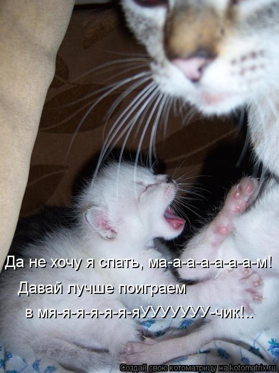 Котоматрица: Да не хочу я спать, ма-а-а-а-а-а-а-м!   Давай лучше поиграем   в мя-я-я-я-я-я-яУУУУУУУ-чик!..