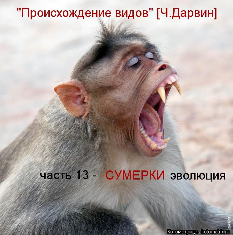 """Котоматрица: """"Происхождение видов"""" [Ч.Дарвин] часть 13 - СУМЕРКИ эволюция"""