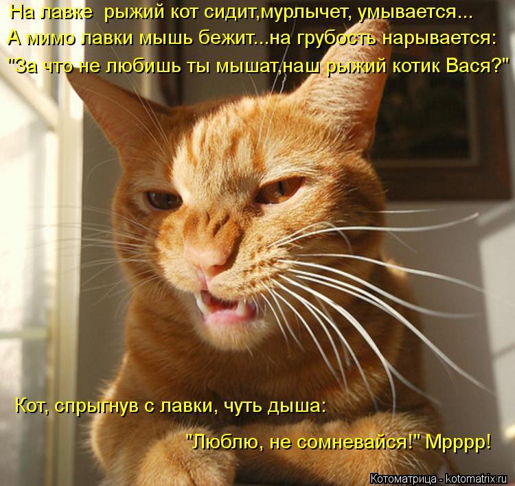 """Котоматрица: А мимо лавки мышь бежит...на грубость нарывается: На лавке  рыжий кот сидит,мурлычет, умывается... """"За что не любишь ты мышат,наш рыжий котик Ва"""