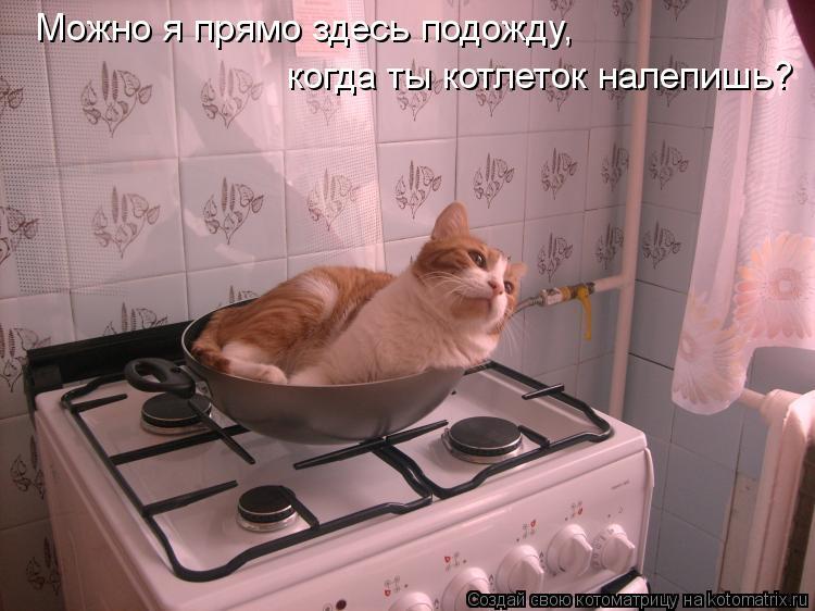 Котоматрица: Можно я прямо здесь подожду, когда ты котлеток налепишь?