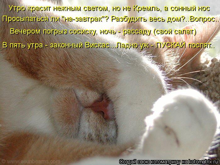 """Котоматрица: Утро красит нежным светом, но не Кремль, а сонный нос Просыпаться ли """"на-завтрак""""? Разбудить весь дом?..Вопрос.. Вечером погрыз сосиску, ночь -"""