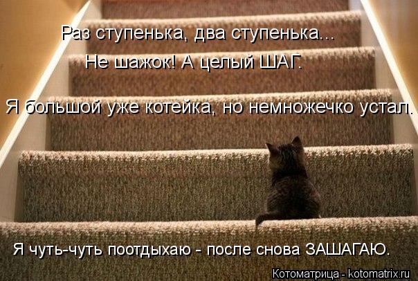 Котоматрица: Раз ступенька, два ступенька... Не шажок! А целый ШАГ. Я чуть-чуть поотдыхаю - после снова ЗАШАГАЮ. Я большой уже котейка, но немножечко устал.