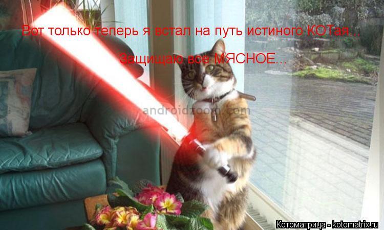 Котоматрица: Вот только теперь я встал на путь истиного КОТая... Защищаю все МЯСНОЕ...