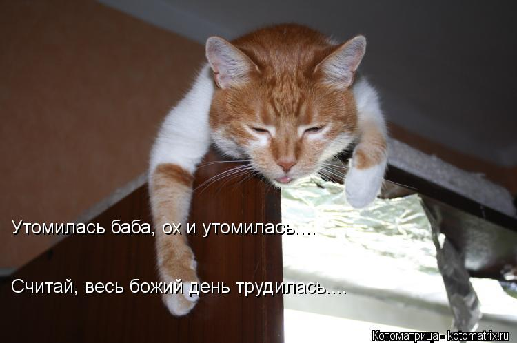Котоматрица: Утомилась баба, ох и утомилась.... Считай, весь божий день трудилась....