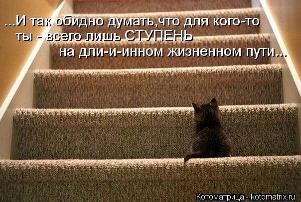 Котоматрица: ...И так обидно думать,что для кого-то ты - всего лишь СТУПЕНЬ  на дли-и-инном жизненном пути...