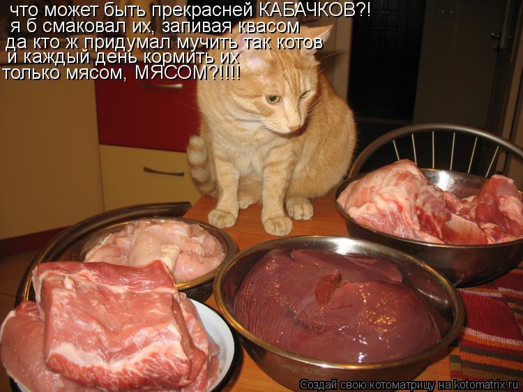 Котоматрица: что может быть прекрасней КАБАЧКОВ?! я б смаковал их, запивая квасом да кто ж придумал мучить так котов и каждый день кормить их только мясом