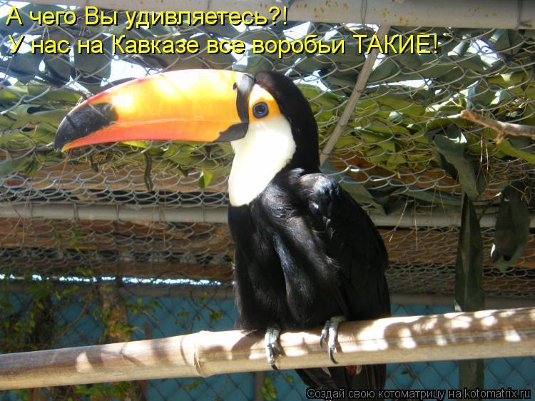Котоматрица: А чего Вы удивляетесь?! У нас на Кавказе все воробьи ТАКИЕ!