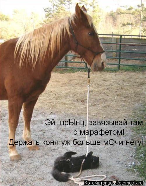 Котоматрица: - Эй, прЫнц, завязывай там  с марафетом! Держать коня уж больше мОчи нету!