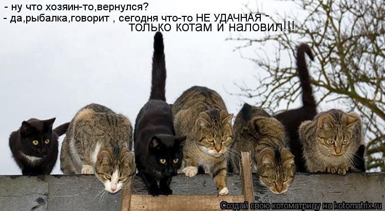 Котоматрица: - ну что хозяин-то,вернулся? - да,рыбалка,говорит , сегодня что-то НЕ УДАЧНАЯ только котам и наловил!!! -