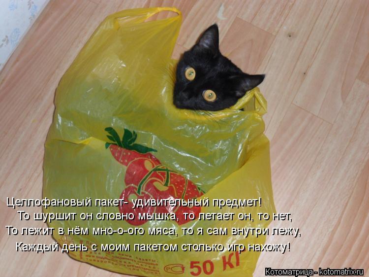 Котоматрица: Целлофановый пакет- удивительный предмет! То шуршит он словно мышка, то летает он, то нет, То лежит в нём мно-о-ого мяса, то я сам внутри лежу,
