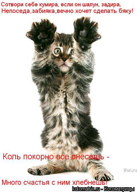 Котоматрица: Сотвори себе кумира, если он шалун, задира, Непоседа,забияка,вечно хочет сделать бяку! Много счастья с ним хлебнешь! Коль покорно все снесеш