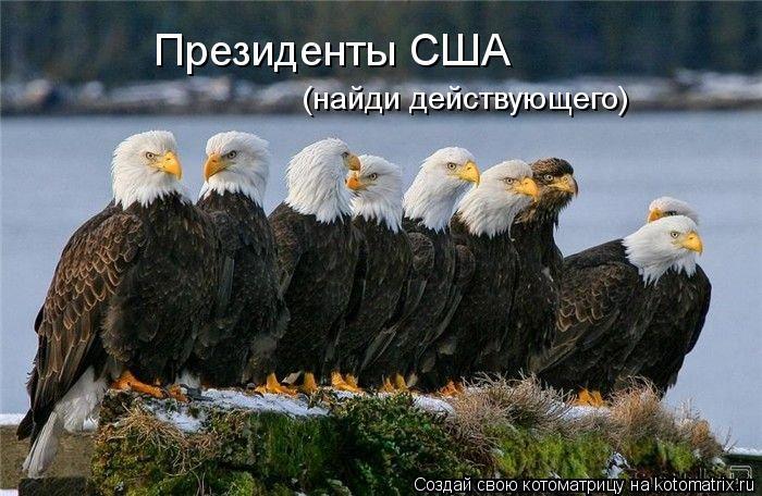 Котоматрица: Президенты США (найди действующего)