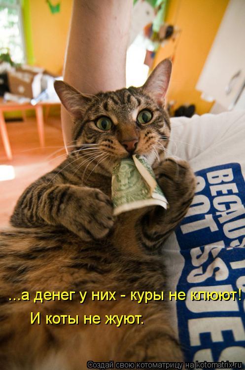 Котоматрица: ...а денег у них - куры не клюют! И коты не жуют.