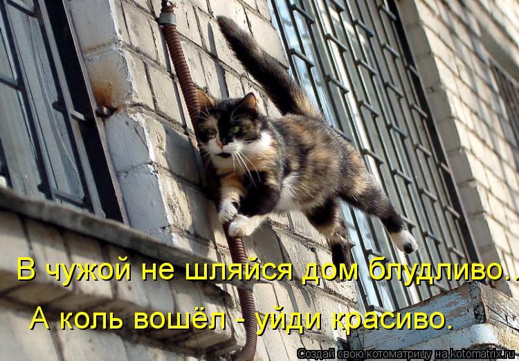 Котоматрица: В чужой не шляйся дом блудливо... А коль вошёл - уйди красиво.
