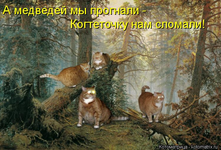 Котоматрица: А медведей мы прогнали -  Когтеточку нам сломали!