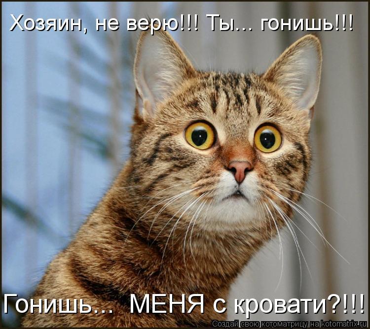 Котоматрица: Хозяин, не верю!!! Ты... гонишь!!! Гонишь...  МЕНЯ с кровати?!!!
