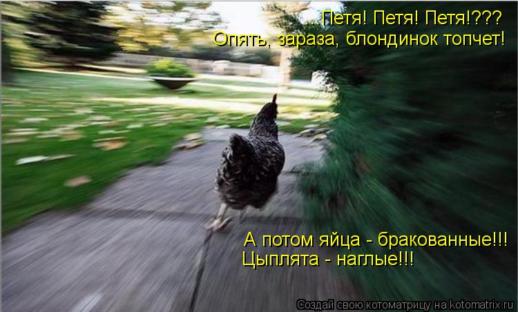 Котоматрица: ...Петя! Петя! Петя!??? Опять, зараза, блондинок топчет! А потом яйца - бракованные!!! Цыплята - наглые!!!