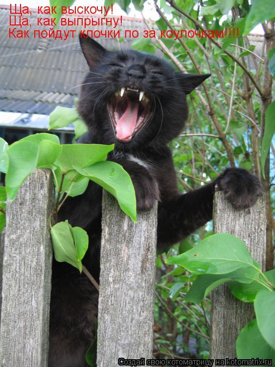 Котоматрица: Ща, как выскочу! Ща, как выпрыгну! Как пойдут клочки по за коулочкам!!!!