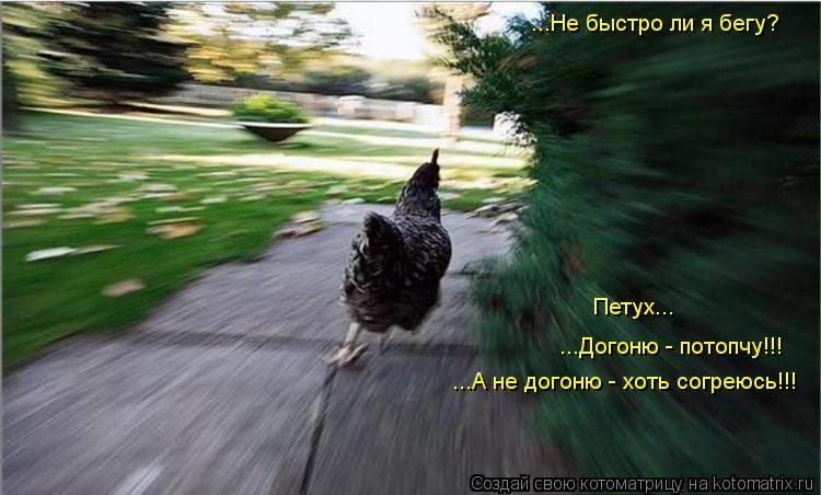 Котоматрица: ...Не быстро ли я бегу? Петух... ...Догоню - потопчу!!! ...А не догоню - хоть согреюсь!!!