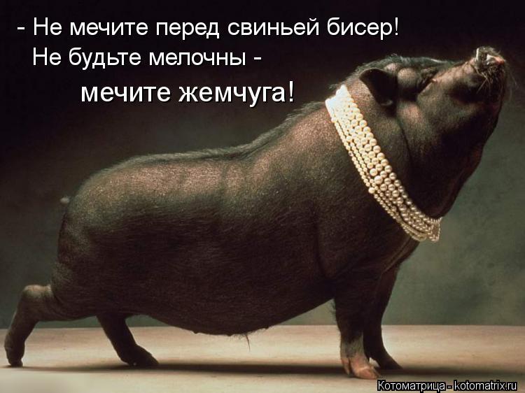 Котоматрица: - Не мечите перед свиньей бисер! Не будьте мелочны -  мечите жемчуга!