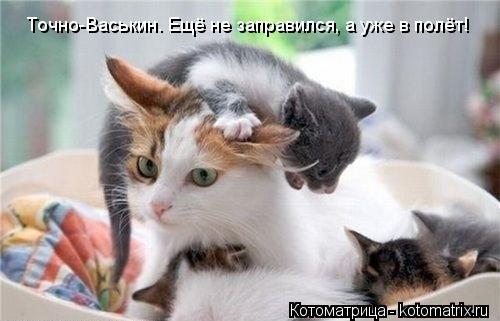 Котоматрица: Точно-Васькин. Ещё не заправился, а уже в полёт!