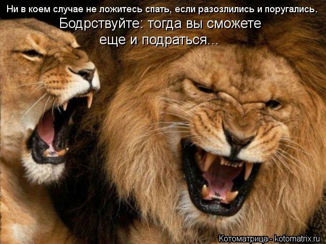 Котоматрица: Ни в коем случае не ложитесь спать, если разозлились и поругались. Бодрствуйте: тогда вы сможете  еще и подраться...