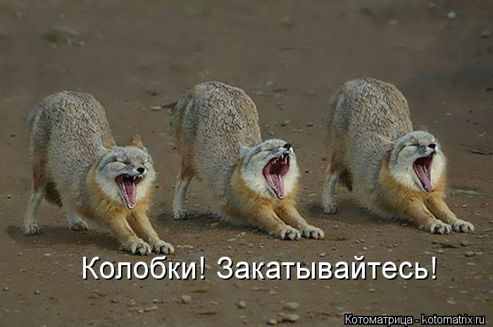 Котоматрица: Колобки! Закатывайтесь!