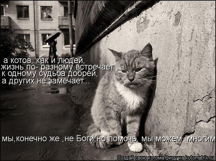 Котоматрица: а котов, как и людей, жизнь по- разному встречает к одному судьба добрей, а других не замечает... мы,конечно же ,не Боги,но помочь  мы можем  мно