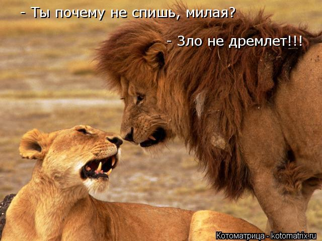 Котоматрица: - Ты почему не спишь, милая?  - Зло не дремлет!!!