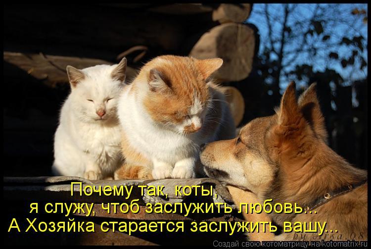 Котоматрица: я служу, чтоб заслужить любовь... Почему так, коты, А Хозяйка старается заслужить вашу...