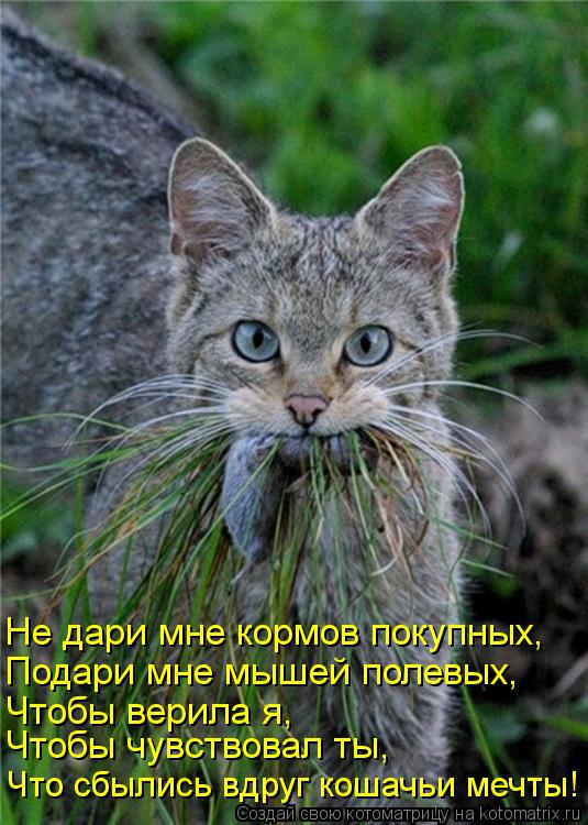 Котоматрица: Что сбылись вдруг кошачьи мечты! Чтобы чувствовал ты, Чтобы верила я, Подари мне мышей полевых, Не дари мне кормов покупных,