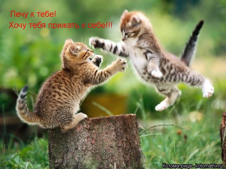 Котоматрица: Лечу к тебе! Хочу тебя прижать к себе!!!