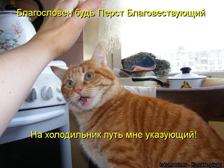 Котоматрица: Благословен будь Перст Благовествующий На холодильник путь мне указующий!