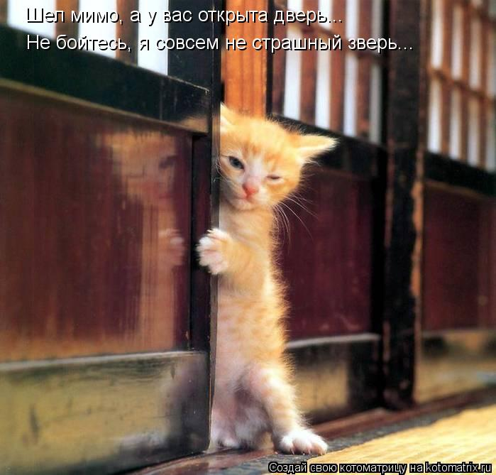 Котоматрица: Шел мимо, а у вас открыта дверь... Не бойтесь, я совсем не страшный зверь...
