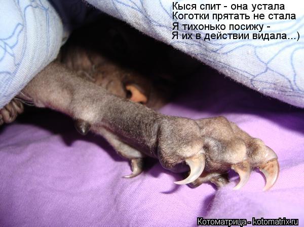 Котоматрица: Коготки прятать не стала Кыся спит - она устала Я тихонько посижу - Я их в действии видала...)