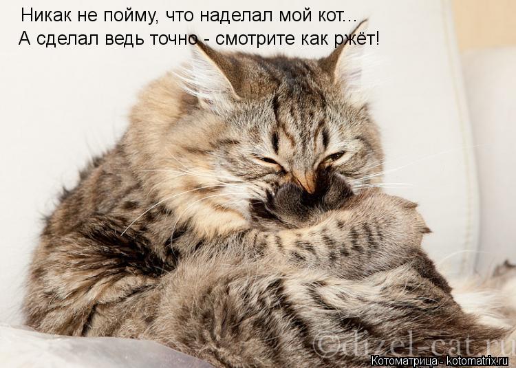 Котоматрица: Никак не пойму, что наделал мой кот... А сделал ведь точно - смотрите как ржёт!