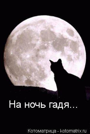 Котоматрица: На ночь гадя...