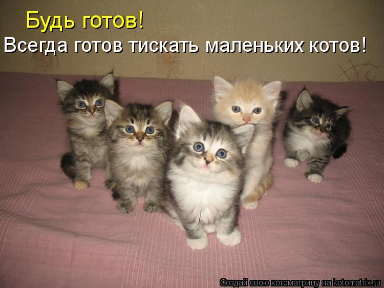 Котоматрица: Всегда готов тискать маленьких котов! Будь готов!