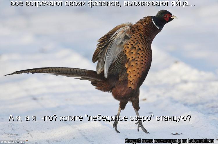 """Котоматрица: все встречают своих фазанов, высиживают яйца... А я, а я  что? хотите """"лебединое озеро"""" станцую?"""